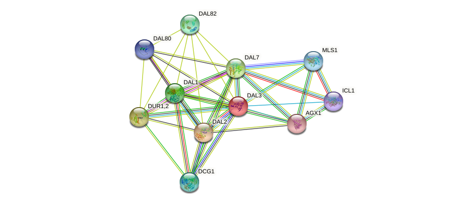 DAL3 protein (Saccharomyces cerevisiae) - STRING interaction network