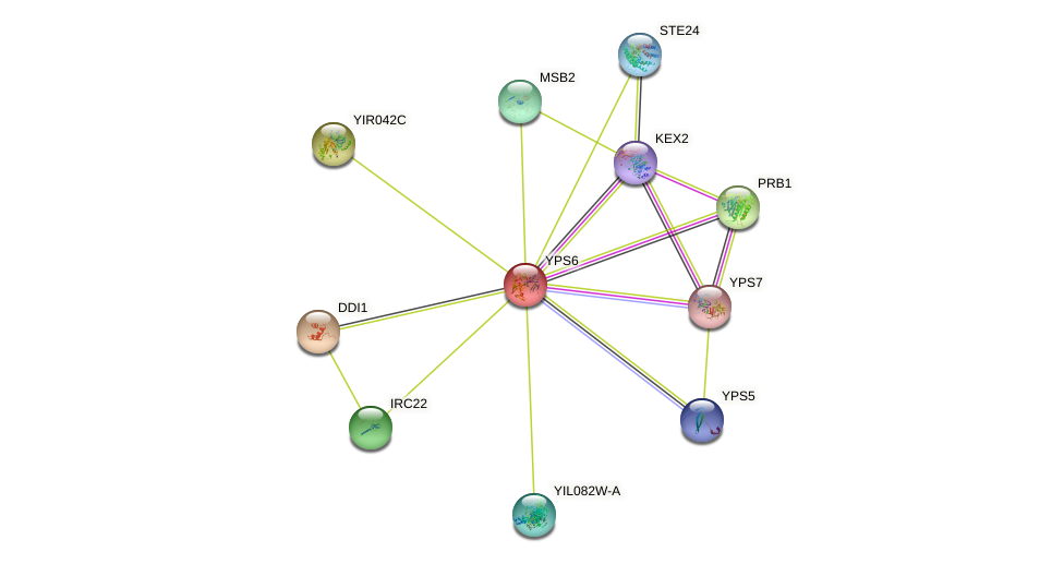 YPS6 protein (Saccharomyces cerevisiae) - STRING interaction network