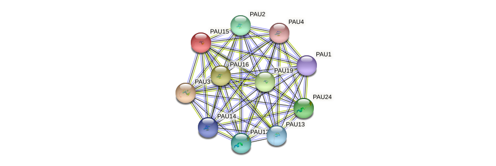 PAU15 protein (Saccharomyces cerevisiae) - STRING interaction network