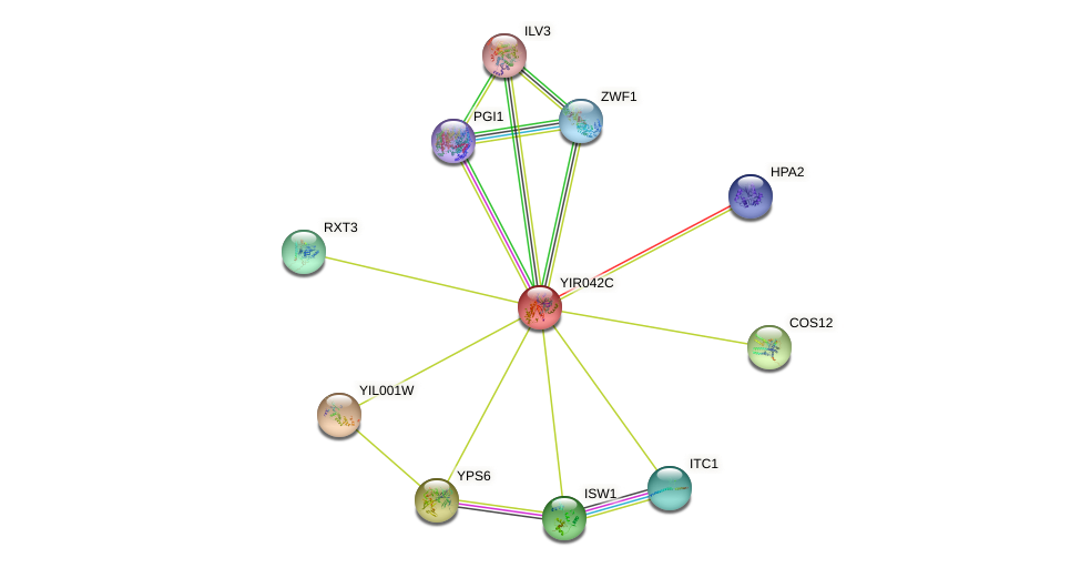 YIR042C protein (Saccharomyces cerevisiae) - STRING interaction network