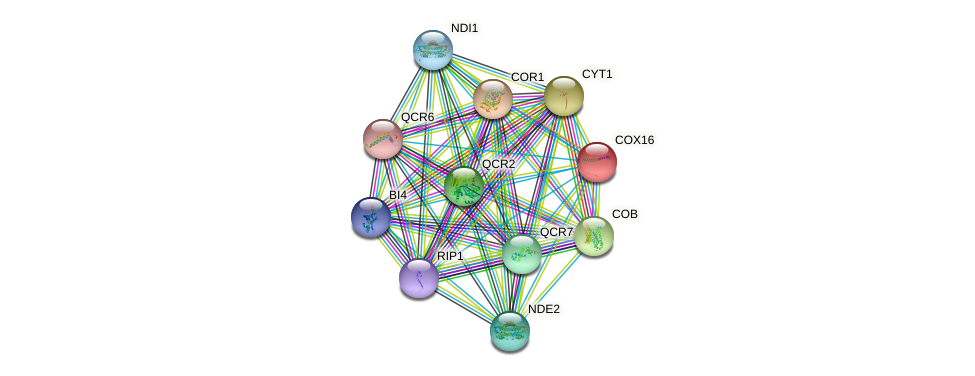 COX16 protein (Saccharomyces cerevisiae) - STRING interaction network