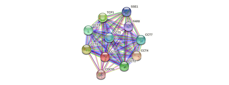 CCT8 protein (Saccharomyces cerevisiae) - STRING interaction network