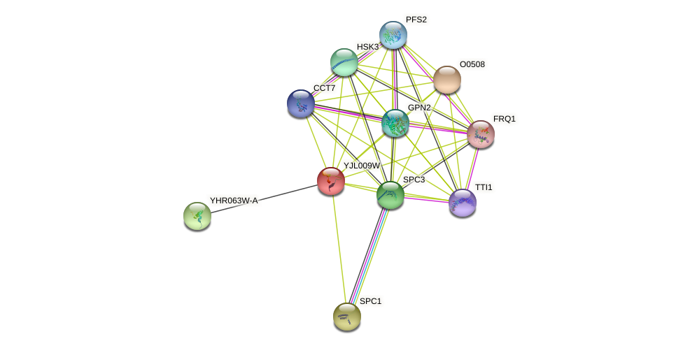 YJL009W protein (Saccharomyces cerevisiae) - STRING interaction network