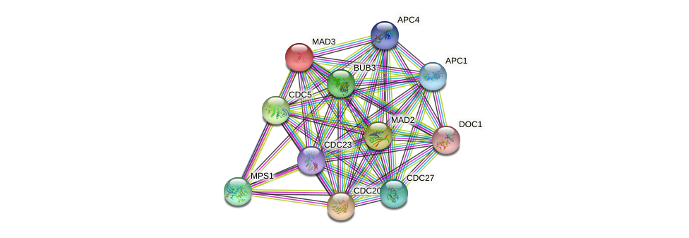 MAD3 protein (Saccharomyces cerevisiae) - STRING interaction network