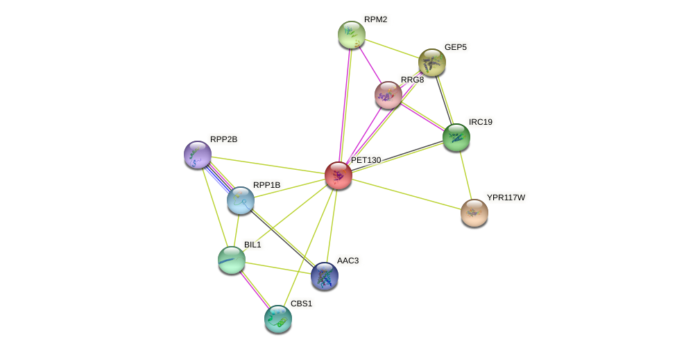 PET130 protein (Saccharomyces cerevisiae) - STRING interaction network