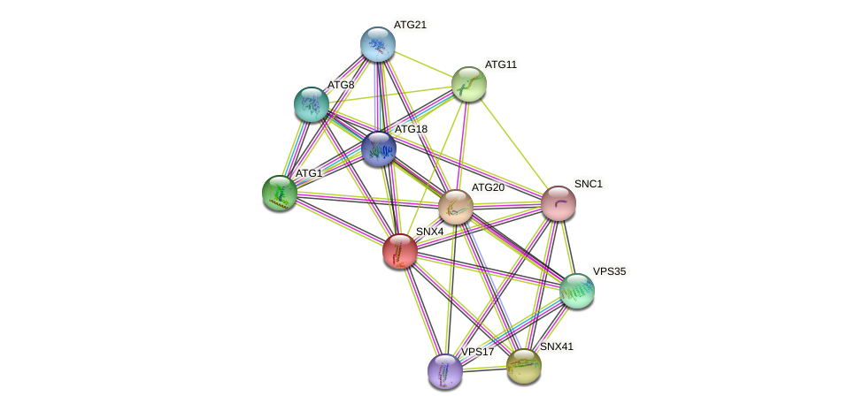 SNX4 protein (Saccharomyces cerevisiae) - STRING interaction network