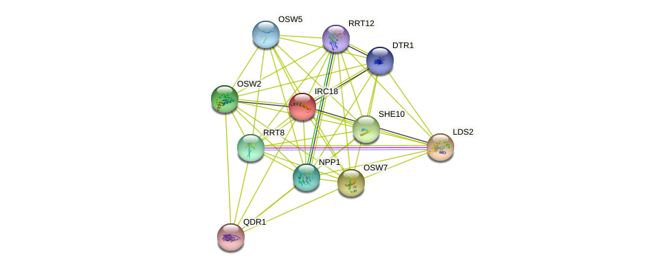 IRC18 protein (Saccharomyces cerevisiae) - STRING interaction network