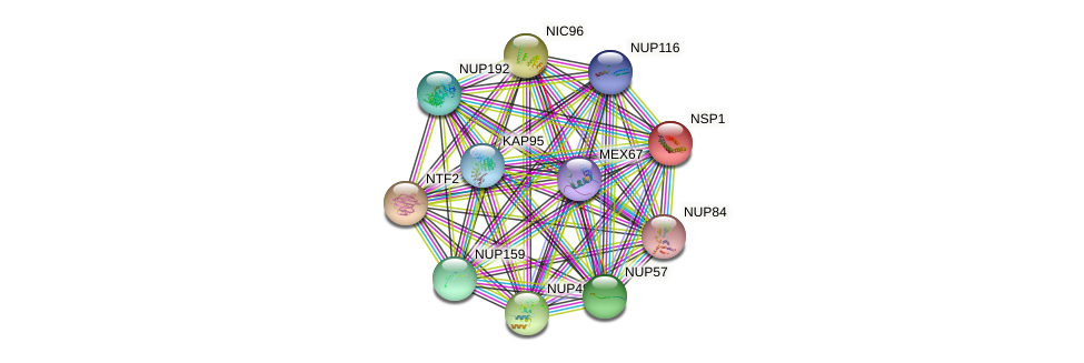 NSP1 protein (Saccharomyces cerevisiae) - STRING interaction network