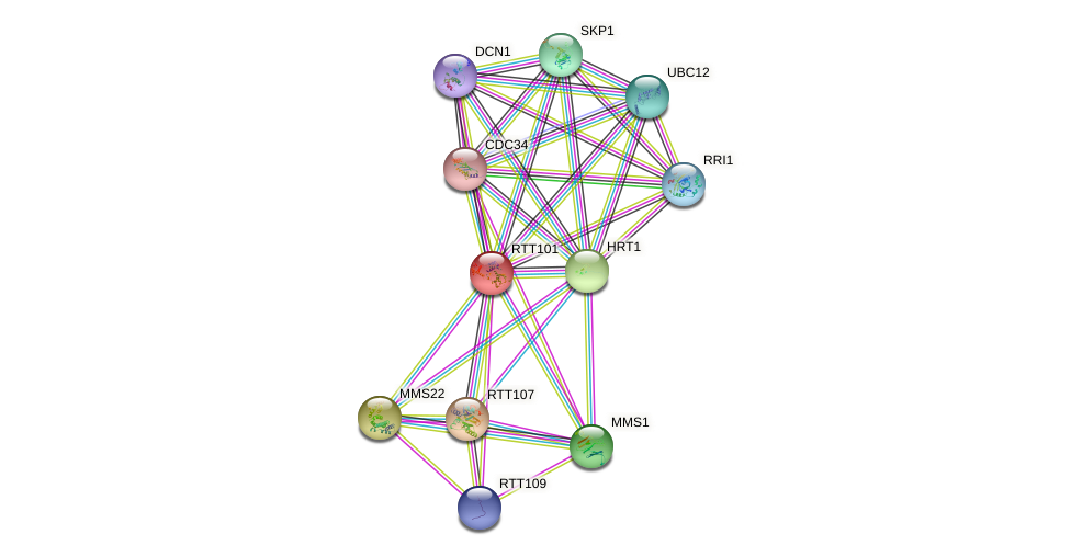 RTT101 protein (Saccharomyces cerevisiae) - STRING interaction network