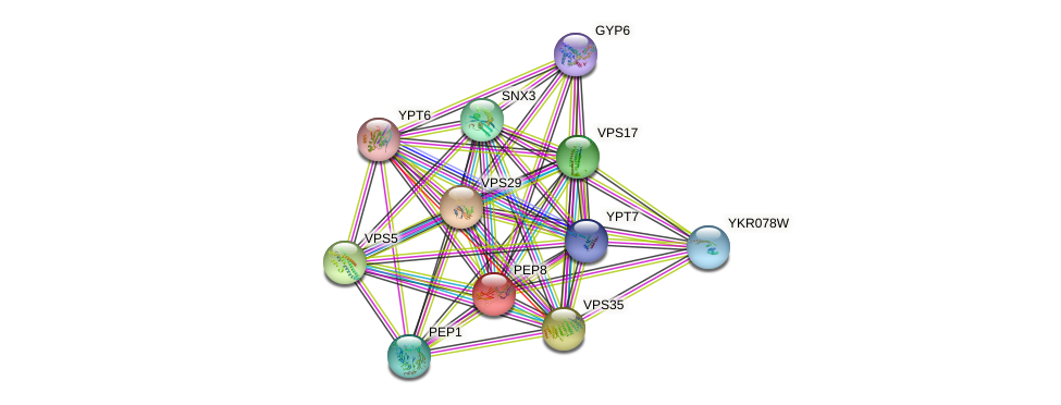 PEP8 protein (Saccharomyces cerevisiae) - STRING interaction network