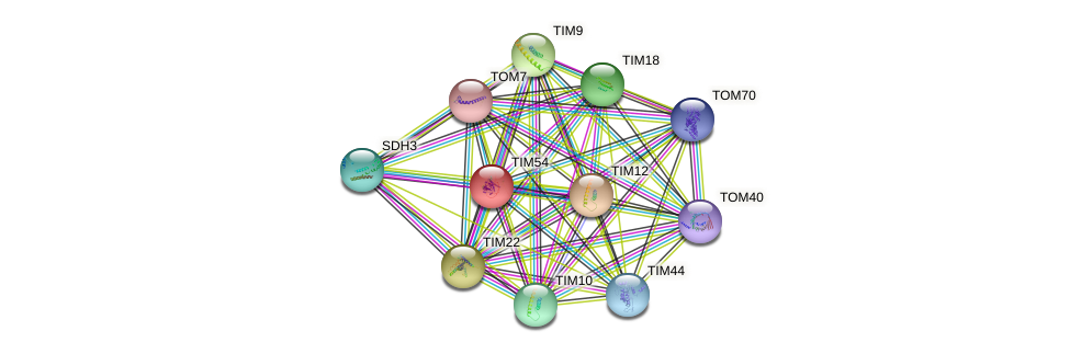TIM54 protein (Saccharomyces cerevisiae) - STRING interaction network