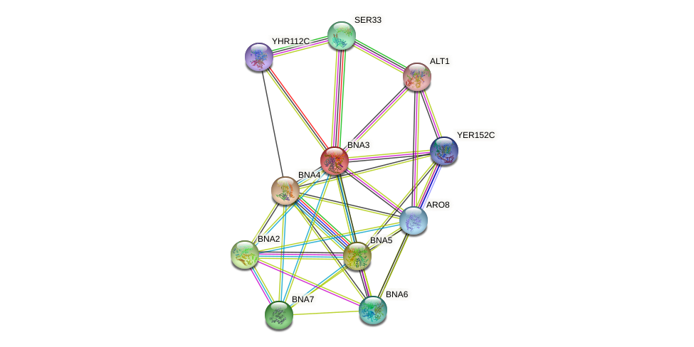 BNA3 protein (Saccharomyces cerevisiae) - STRING interaction network