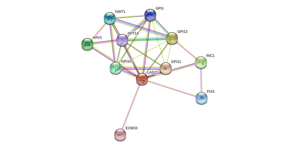 LAS21 protein (Saccharomyces cerevisiae) - STRING interaction network