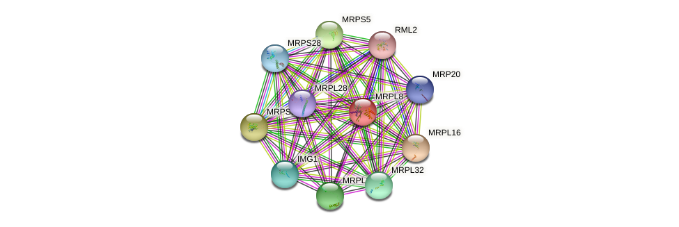 MRPL8 protein (Saccharomyces cerevisiae) - STRING interaction network