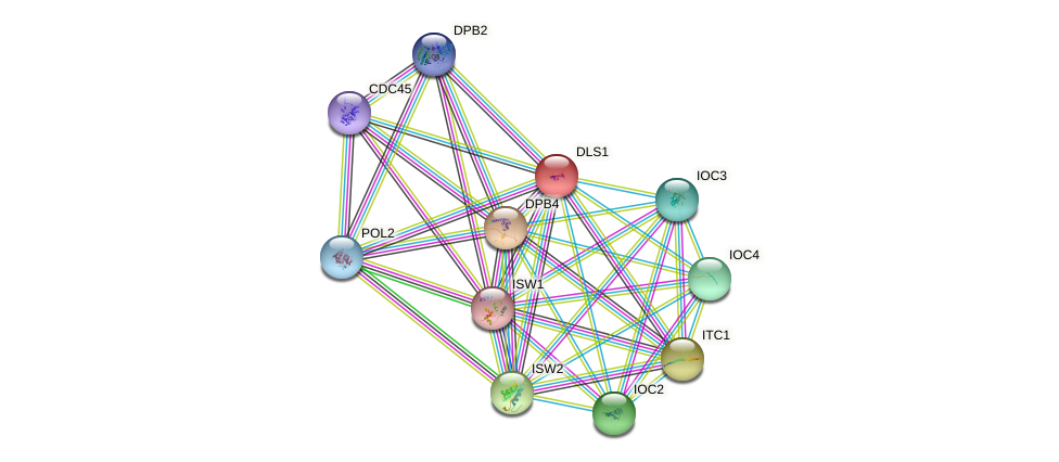 DLS1 protein (Saccharomyces cerevisiae) - STRING interaction network