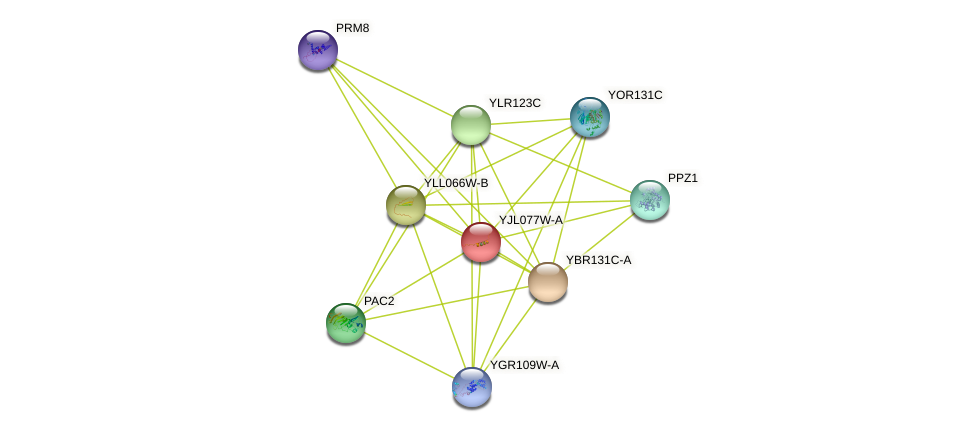 YJL077W-A protein (Saccharomyces cerevisiae) - STRING interaction network