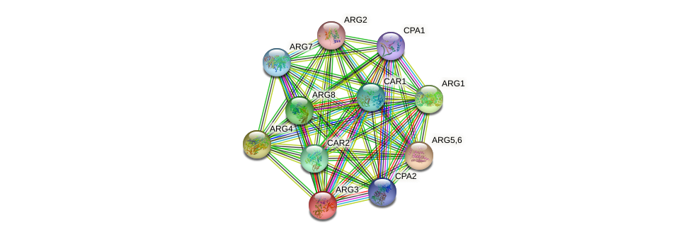 ARG3 protein (Saccharomyces cerevisiae) - STRING interaction network