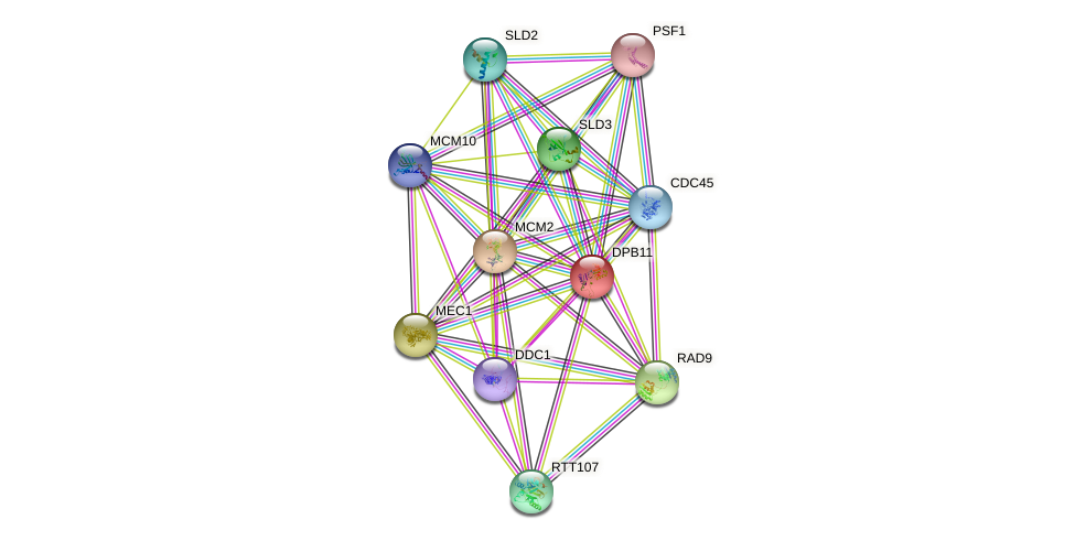 DPB11 protein (Saccharomyces cerevisiae) - STRING interaction network