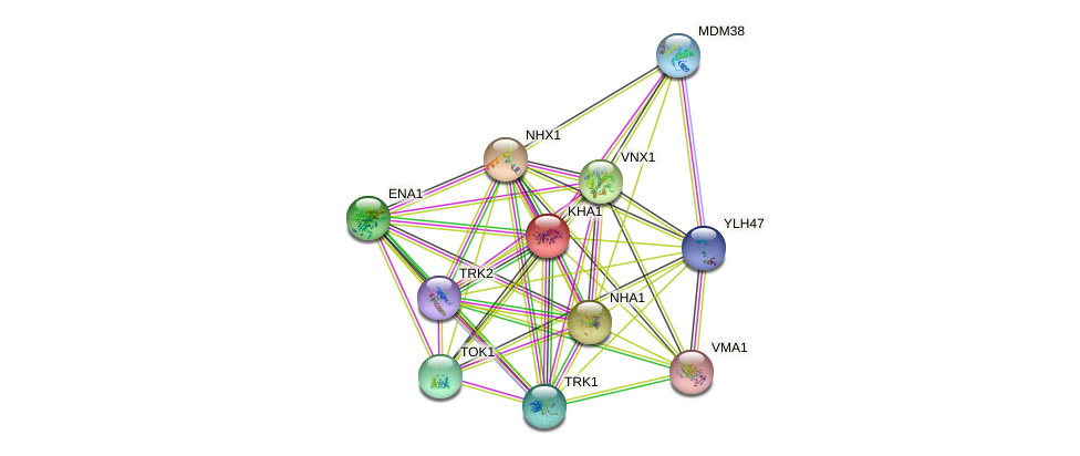 KHA1 protein (Saccharomyces cerevisiae) - STRING interaction network