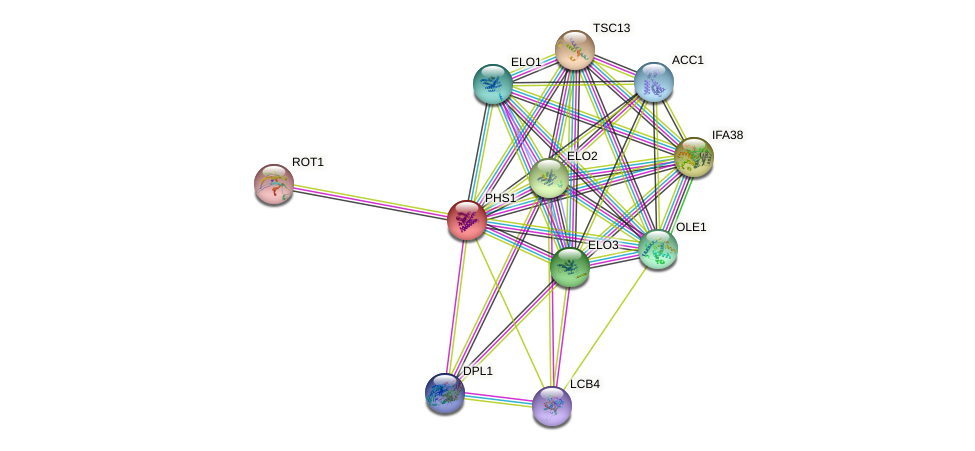 PHS1 protein (Saccharomyces cerevisiae) - STRING interaction network