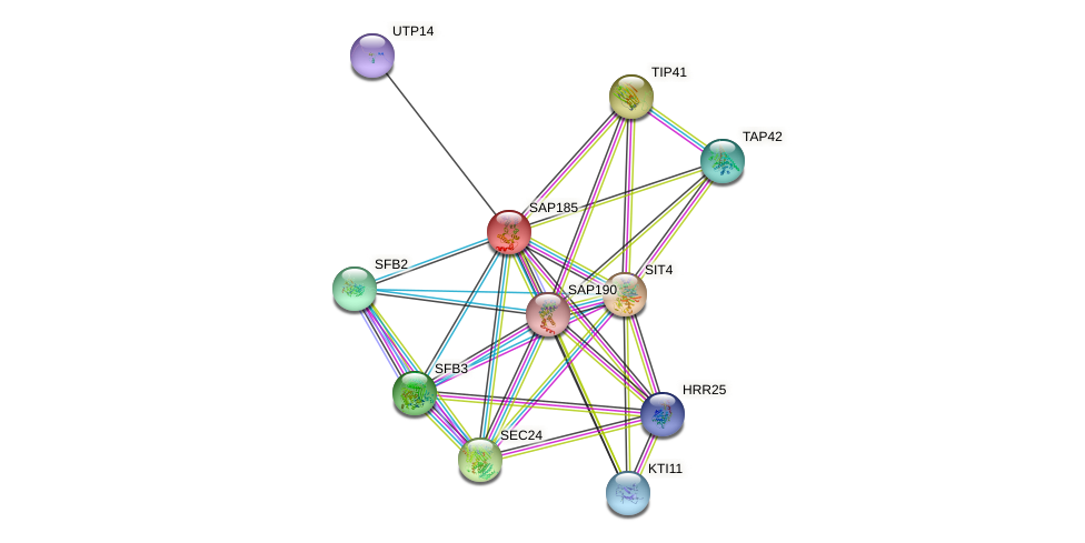 SAP185 protein (Saccharomyces cerevisiae) - STRING interaction network