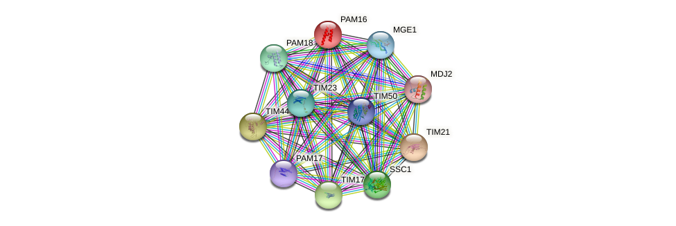 PAM16 protein (Saccharomyces cerevisiae) - STRING interaction network