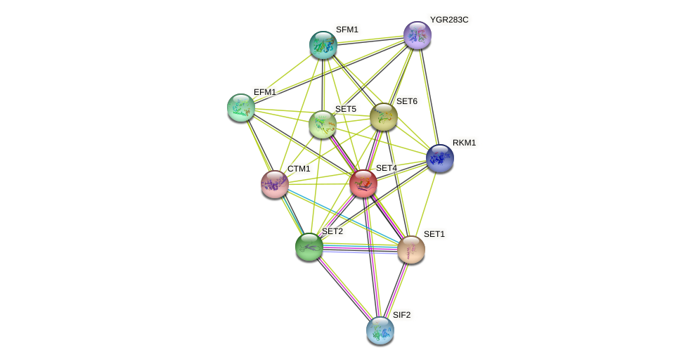 SET4 protein (Saccharomyces cerevisiae) - STRING interaction network