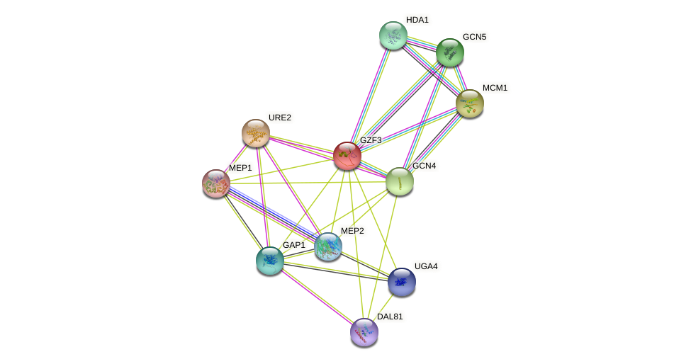 GZF3 protein (Saccharomyces cerevisiae) - STRING interaction network