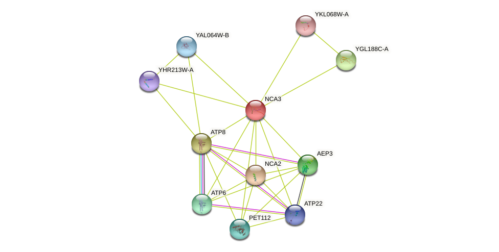 NCA3 protein (Saccharomyces cerevisiae) - STRING interaction network
