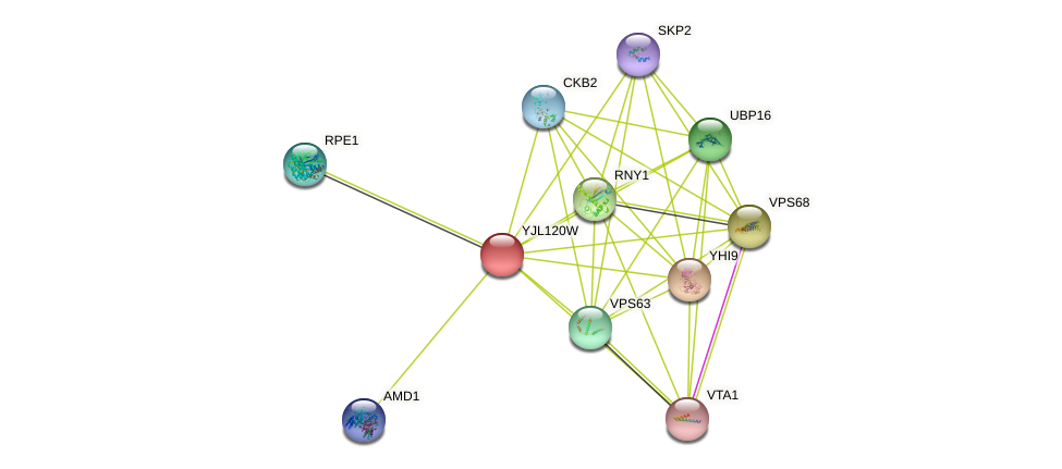 YJL120W protein (Saccharomyces cerevisiae) - STRING interaction network