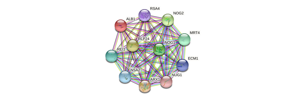 ALB1 protein (Saccharomyces cerevisiae) - STRING interaction network