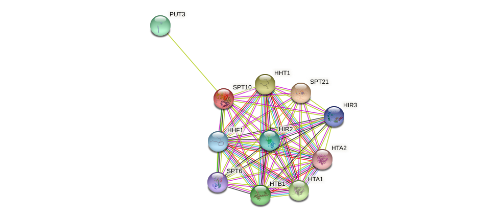 SPT10 protein (Saccharomyces cerevisiae) - STRING interaction network