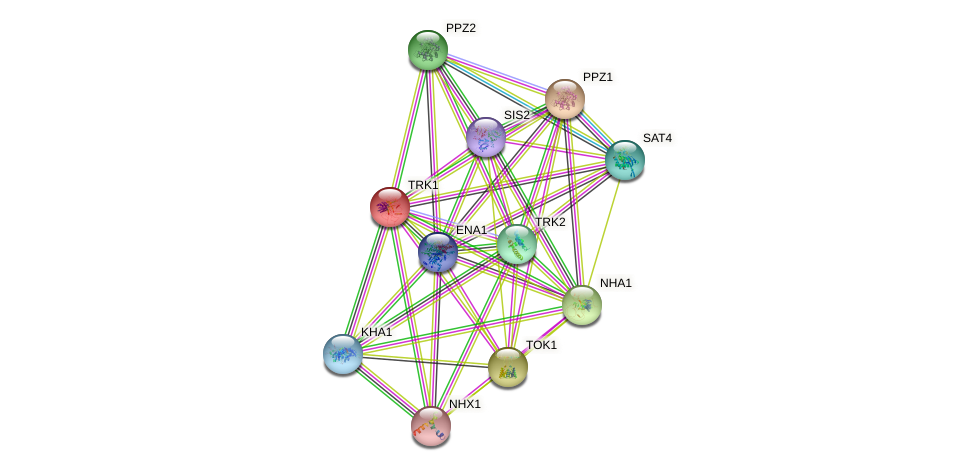 TRK1 protein (Saccharomyces cerevisiae) - STRING interaction network