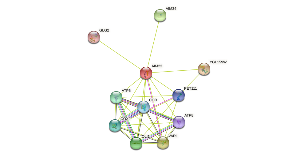 AIM23 protein (Saccharomyces cerevisiae) - STRING interaction network