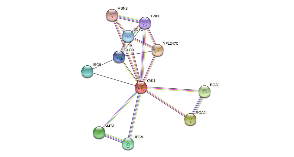 YAK1 protein (Saccharomyces cerevisiae) - STRING interaction network