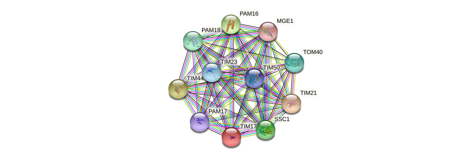 TIM17 protein (Saccharomyces cerevisiae) - STRING interaction network