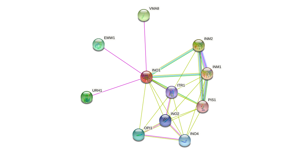 INO1 protein (Saccharomyces cerevisiae) - STRING interaction network