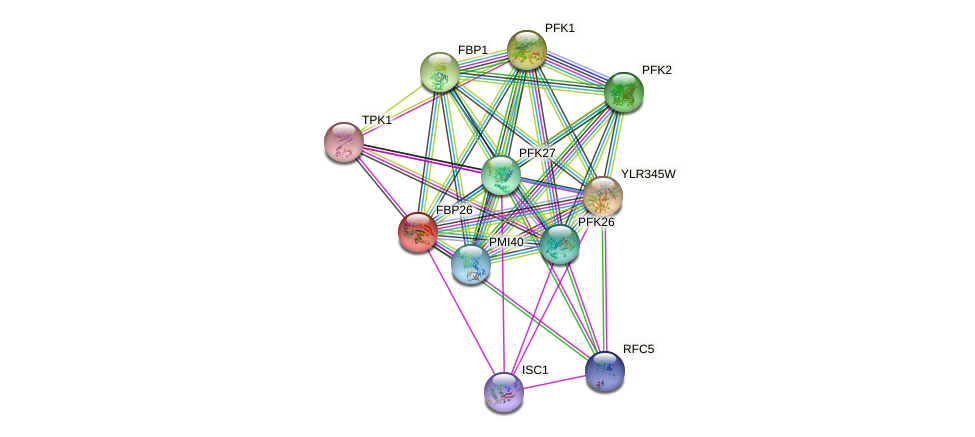 FBP26 protein (Saccharomyces cerevisiae) - STRING interaction network