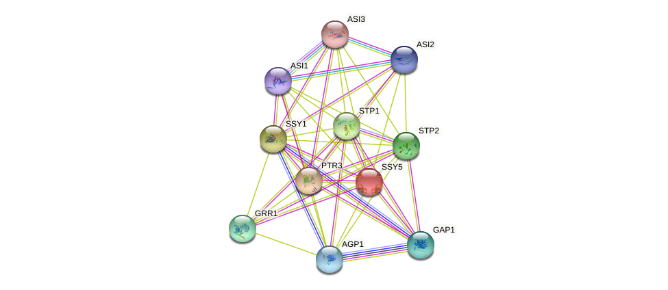 SSY5 protein (Saccharomyces cerevisiae) - STRING interaction network