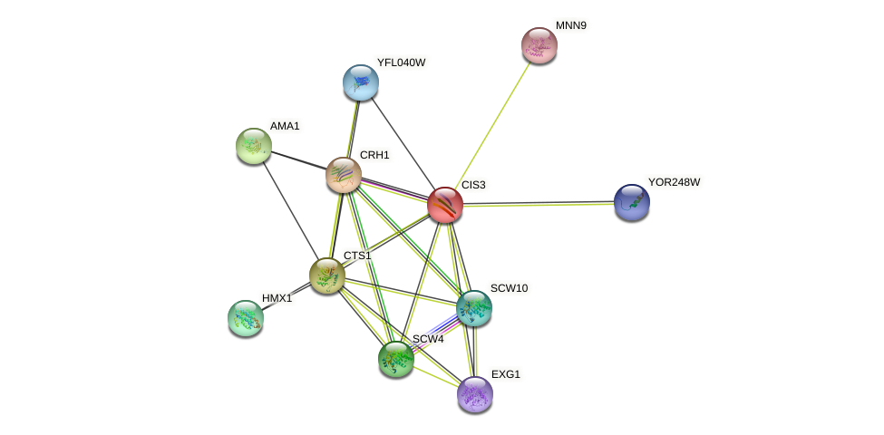 CIS3 protein (Saccharomyces cerevisiae) - STRING interaction network