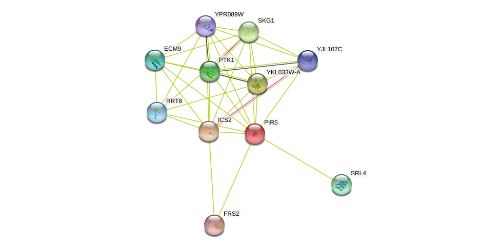 PIR5 protein (Saccharomyces cerevisiae) - STRING interaction network