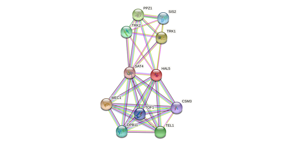 HAL5 protein (Saccharomyces cerevisiae) - STRING interaction network