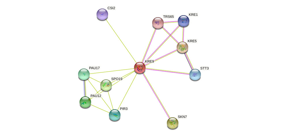 KRE9 protein (Saccharomyces cerevisiae) - STRING interaction network