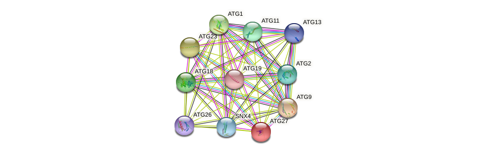 ATG27 protein (Saccharomyces cerevisiae) - STRING interaction network