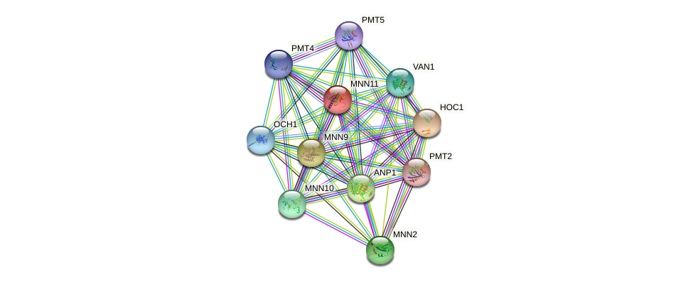 MNN11 protein (Saccharomyces cerevisiae) - STRING interaction network