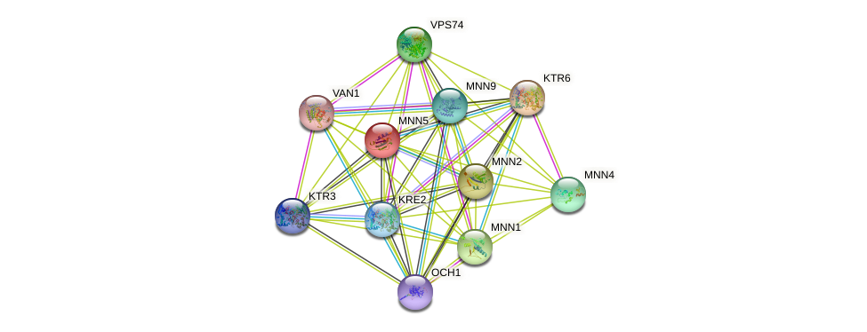 MNN5 protein (Saccharomyces cerevisiae) - STRING interaction network