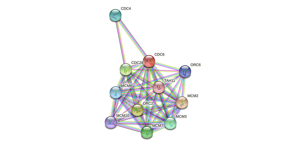CDC6 protein (Saccharomyces cerevisiae) - STRING interaction network