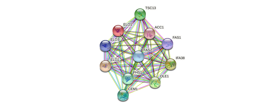 ELO1 protein (Saccharomyces cerevisiae) - STRING interaction network