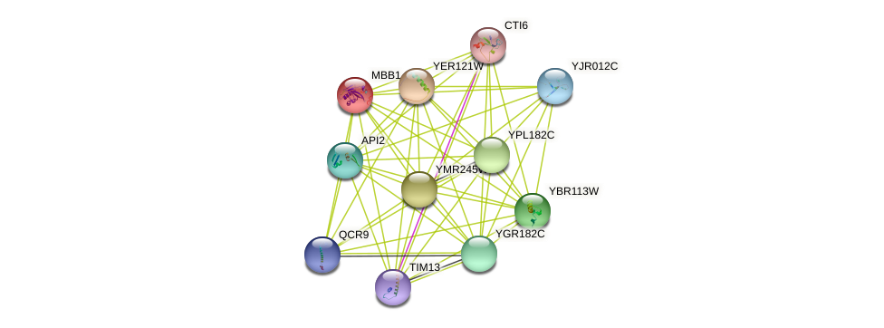 MBB1 protein (Saccharomyces cerevisiae) - STRING interaction network