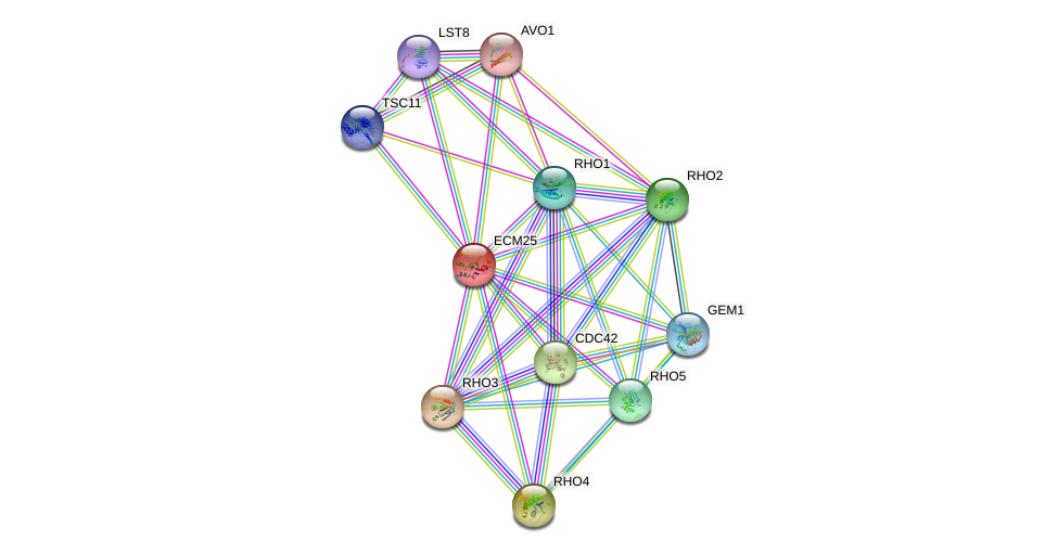 ECM25 protein (Saccharomyces cerevisiae) - STRING interaction network